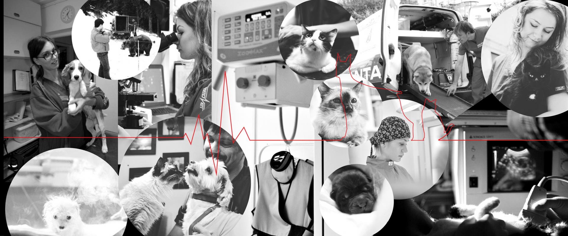 Serviciul veterinar de urgenta Speed Vet
