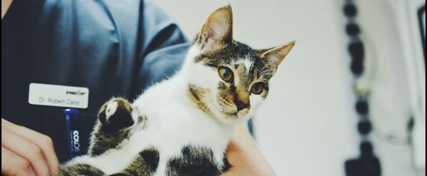 Caliciviroza felină