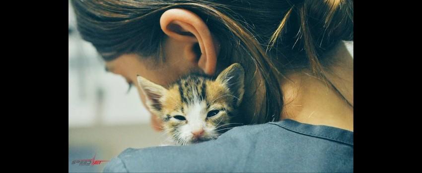 FIP - Peritonită infecțioasă felină