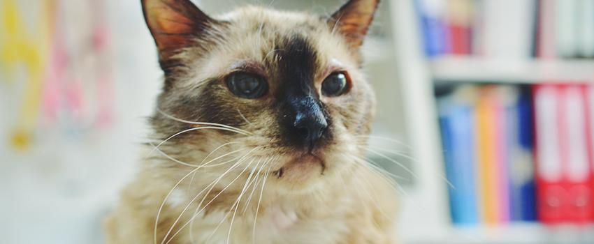 Obezitatea la pisici - cum tratăm?
